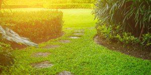 Skapa din drömträdgård